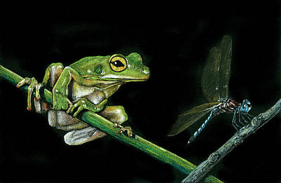 Frog And Dragonfly Poster