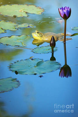 Poster featuring the photograph Frog And Lily by Ellen Cotton