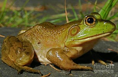 Frog At Night Poster by David Rucker