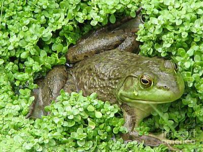 Frog Poster by DejaVu Designs