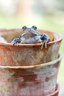 Frog In A Pot Poster by Tim Gainey