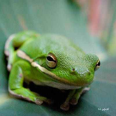 Poster featuring the photograph Froggy Smile Squared by TK Goforth