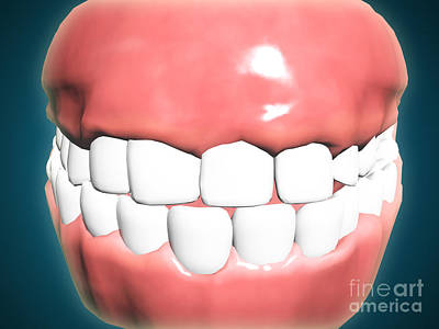 Front View Of Human Mouth With Teeth Poster by Stocktrek Images