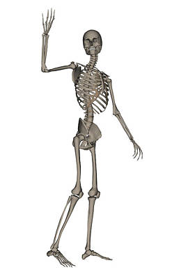 Front View Of Human Skeleton Waving Poster