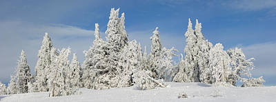 Frost And Ice On Trees In Midwinter Poster