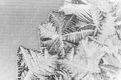 Frost In Black And White Poster