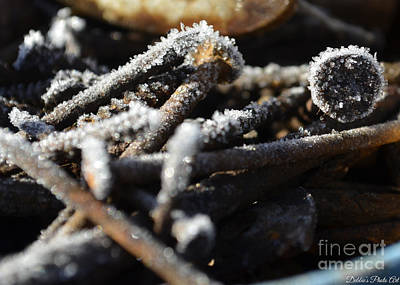 Frost On Metal 2 Poster by Debbie Portwood