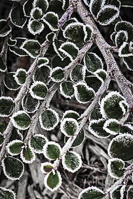 Frost On Plant Branch In Late Fall Poster