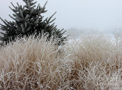 Frosted Grasses Poster by Debbie Hart
