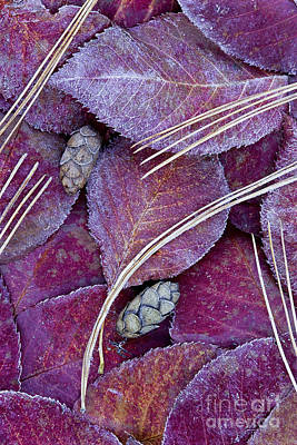 Poster featuring the photograph Frosted Leaves by Alan L Graham