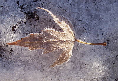 Poster featuring the photograph Frozen Leaf by Richard Bryce and Family
