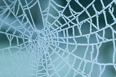 Frozen Spiders Web Poster