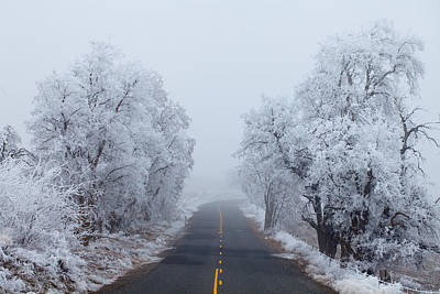 Frozen Trees Poster by Darren  White