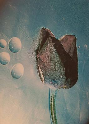 Frozen Tulip Poster