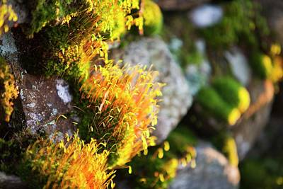 Fruiting Bodies On Moss Poster