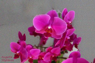 Fuchia Flower Poster