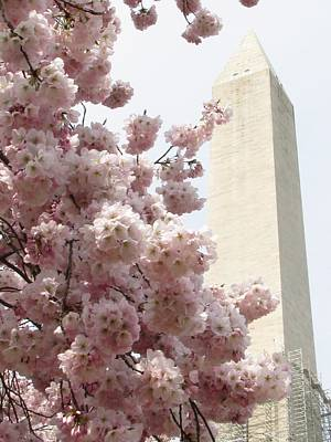 Poster featuring the photograph Full Bloom In Dc by Jennifer Wheatley Wolf