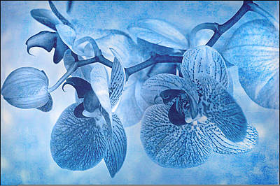 Full Moon Orchids Poster