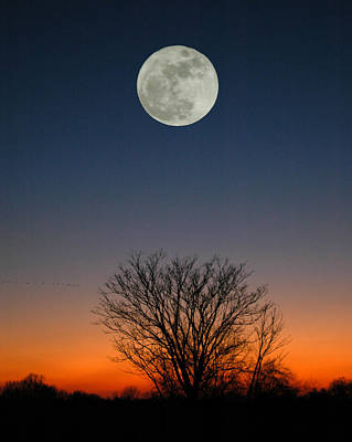 Poster featuring the photograph Full Moon Rising by Raymond Salani III