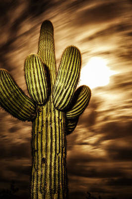 Poster featuring the photograph Full Moon Saguaro by Anthony Citro