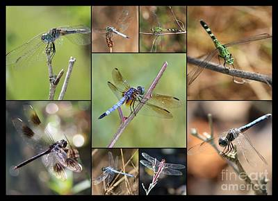 Fun Dragonfly Collage Poster by Carol Groenen