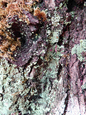 Poster featuring the photograph Fungus Bark Purple by Laurie Tsemak
