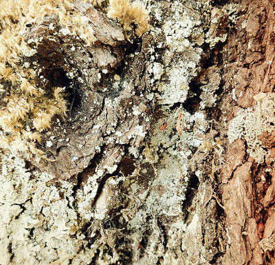 Poster featuring the photograph Fungus Bark Vintage by Laurie Tsemak
