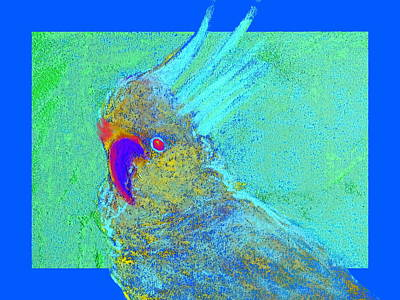 Funky Sulphur Crested Cockatoo Bird Art Prints Poster by Sue Jacobi