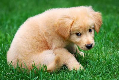 Fuzzy Golden Puppy Poster
