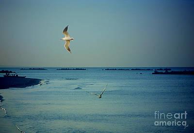 Gabbiani - Seagulls Poster