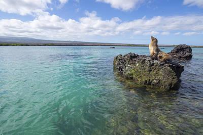 Galapagos Sea Lion Elizabeth Bay Poster by Tui De Roy