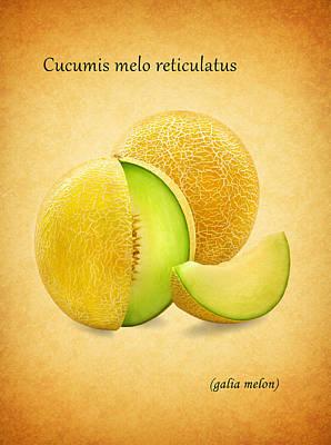 Galia Melon Poster by Mark Rogan