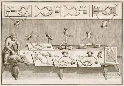 Galvani's Electricity Experiments, 1780s Poster by British Library