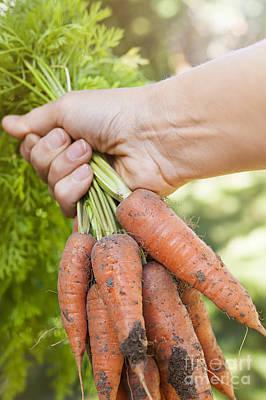 Garden Carrots Poster by Elena Elisseeva