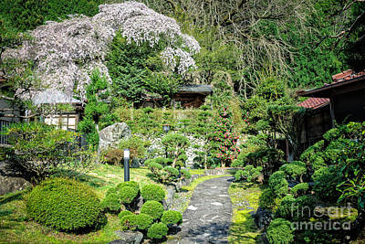 Garden Of A Japanese Ryokan With Sakura - Cherry Blossom Poster