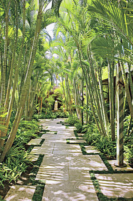 Garden Path And Palm Trees Poster by Mary E. Nichols