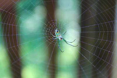 Poster featuring the photograph Garden Spider by Candice Trimble