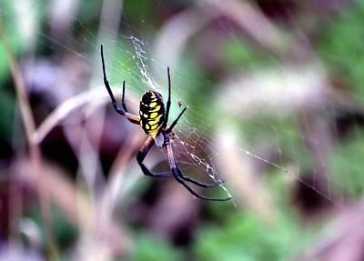 Garden Spider Poster by Deena Stoddard