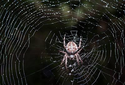 Poster featuring the photograph Garden Spider by Matt Malloy