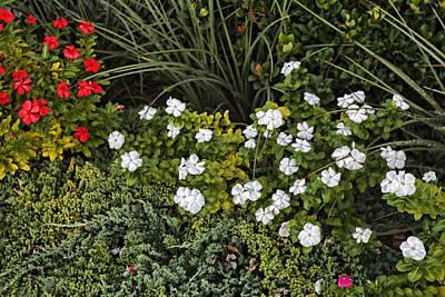 Garden White Poster by Linda Phelps