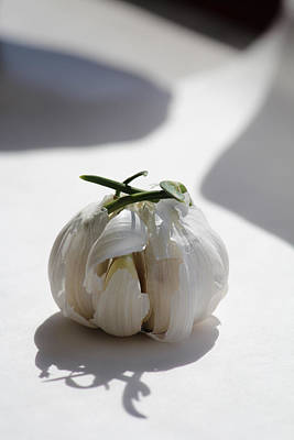 Garlic Clove Poster
