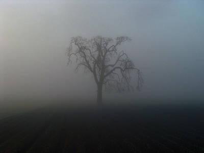 Garry Oak In Fog Poster by Cheryl Hoyle