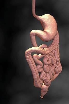 Gastrointestinal System Poster