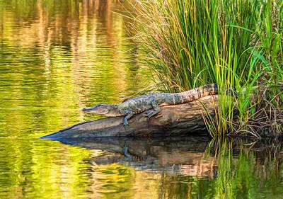 Gator 3 - Paint Poster by Steve Harrington