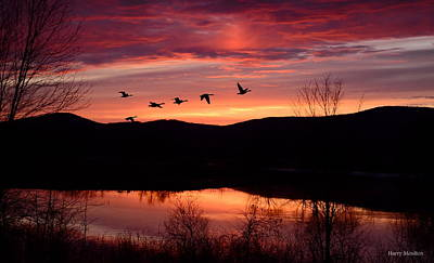Geese After Sunset Poster