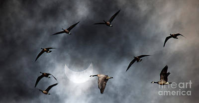 Geese In Solar Eclips Poster by Rebecca Cozart