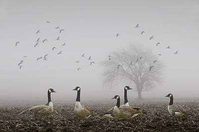 Geese On A Foggy Morning Poster by Randall Nyhof