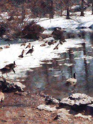 Geese On An Icy Pond Poster by Susan Savad
