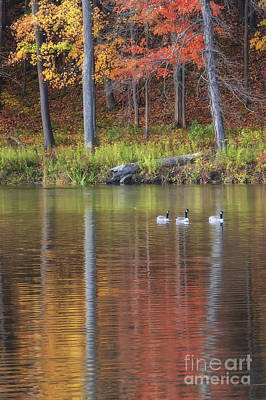 Geese On Beebe Lake Poster by Michele Steffey