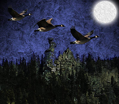 Geese Over Golden Gate Canyon Poster
